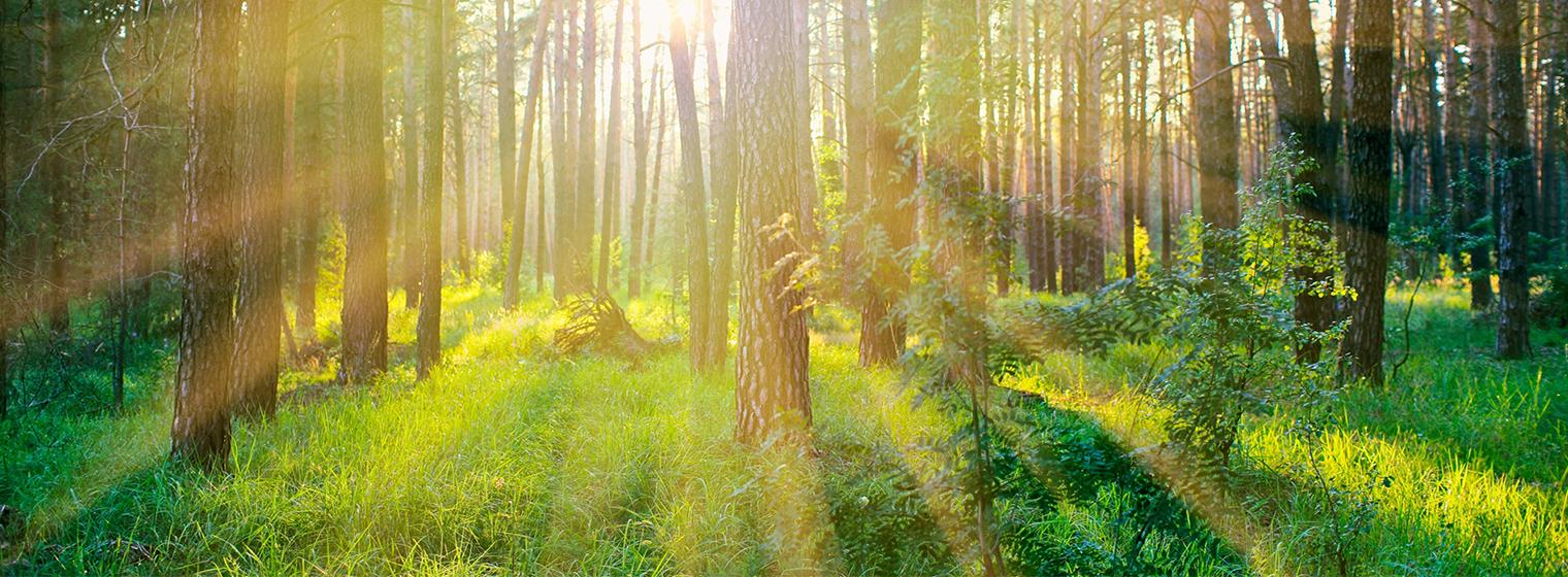 Votorantim – PLANFLOR: planejamento florestal de longo prazo
